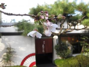 桜 2009.3.21